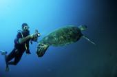 Crociere in Oman, nave Saman Explorer: immersione nel Mar Arabico nel Dhofar, foto sub di una tartaruga marina.