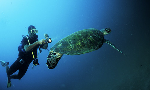 Scubadiving in Oman a Muscat