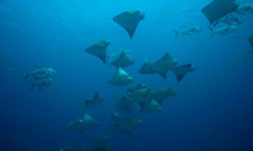 Viaggi per Sub in Oman, nel Dhofar dove l' Oceano Indiano diventa il Mar Arabico. Vacanza Sub a Salalah, Sud Oman. Tour e Scuba Diving in Oman per gruppi e individuali. Anno 2020