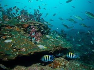 Immersioni in Oman, il colorato mondo subacqueo.