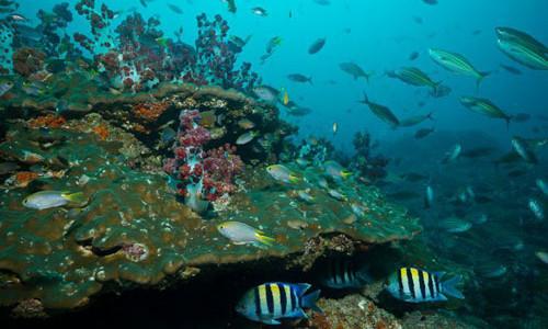 OMAN, IL MARE DEL GOLFO DELL' OMAN E L' OCEANO INDIANO: DIVING, SNORKELING, PESCA D' ALTURA E AL BOLENTINO, WINDSURF, KITESURF, VELA.