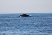 viaggi in Oman sud, foto delle isole del Dhofar con una balena.