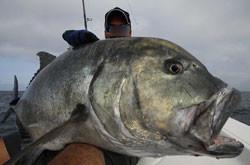 Pesca in Oman. jigging G.T.