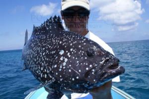 Pesca nelle Isole del Sud Oman, Mare Arabico, famose per la pesca da Big Game. Foto della barca per la pesca, popping, jigging al G.T. ed altri pesci da record. Foto di una palamita.