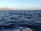 Pesca in Oman, foto dei delfini nell' Oceano Indiano intorno alle isole del Dhofar.