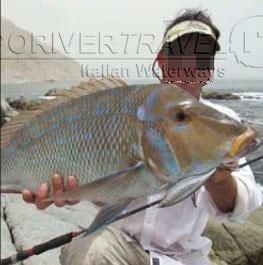 Pesca in Oman Sud dalla spiaggia, foto di uno spot sulle coste nel Dhofar, intorno a Salalah nel Mar Arabico, parte dell' Oceano Indiano. Cattura con artificiale a spinning.