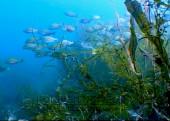 Scuba diving, viaggi per Sub in Oman Sud, foto di un fondale durante una immersione.