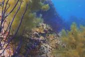 Scuba diving, viaggi per Sub in Oman Sud, foto di un fondale durante una immersione a nord di Muscat.
