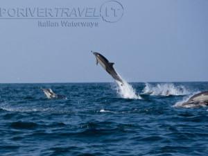 Crociera in Oman nel Mar Arabico, a bordo della nave Saman Explorer, foto di un grosso branco di delfini.