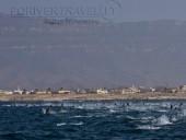 Crociere in Oman, nave Saman Explorer: immersione nel Mar Arabico nel Dhofar, foto sub di una manta.