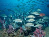 Crociere in Oman, nave Saman Explorer: immersione nel Mar Arabico nel Dhofar