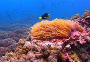 Crociere in Oman, nave Saman Explorer: immersione nel Mar Arabico nel Dhofar, foto sub del colorato fondale marino.