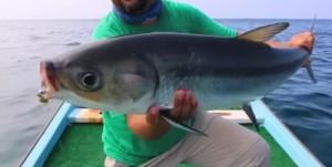 Fly fishing Oman, foto di milk fish,
