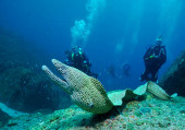Viaggi sub in Oman tour e crociere sub diving e immersioni