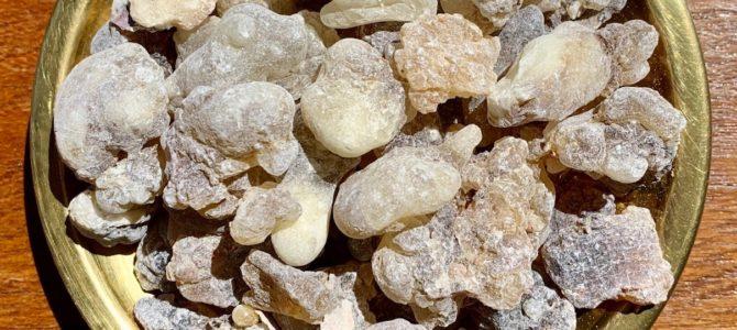 Vendita: Incenso Oman Al Hojari Boswellia Sacra, Oman Dhofar Salalah, Grani di Resina Grado da 12 a 20 mm. Frankincense Al Hojari Bosvellia Sacra Best Quality Pieces 12 – 20 mm.