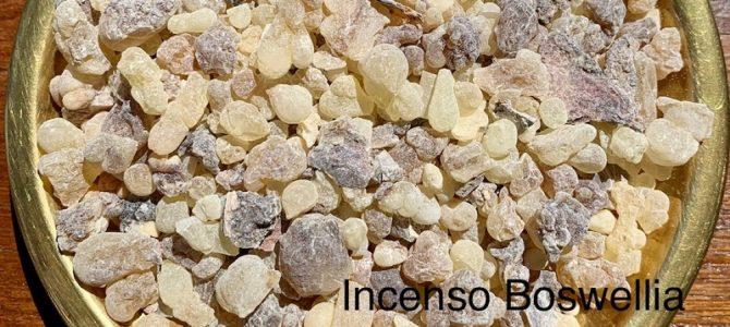 Incenso Oman Al Hojari Boswellia Sacra, Oman Dhofar Salalah, Grado Resina Grani Piccoli. Frankincense Al Hojari Bosvellia Sacra Best Quality Pieces 05 – 12 mm.